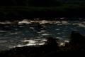 『京都新聞写真コンテスト  光流れる河』