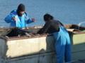 京都新聞写真コンテスト やった!大漁、大漁