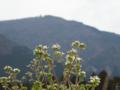 京都新聞写真コンテスト 比良の里山春うれし