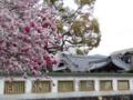 京都新聞写真コンテスト 赤桃、白桃