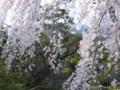 京都新聞写真コンテスト 一瞬の輝き