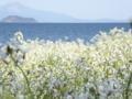 京都新聞写真コンテスト 白の輝き竹生島も脇役