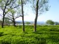 京都新聞写真コンテスト うす黄緑の絨緞