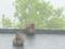 京都新聞写真コンテスト 冷たい春雨