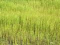 京都新聞写真コンテスト 立夏草原