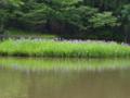 京都新聞写真コンテスト 近江の幸せ