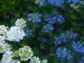 京都新聞写真コンテスト 雨に輝く