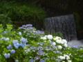 京都新聞写真コンテスト せせらぎに紫陽花