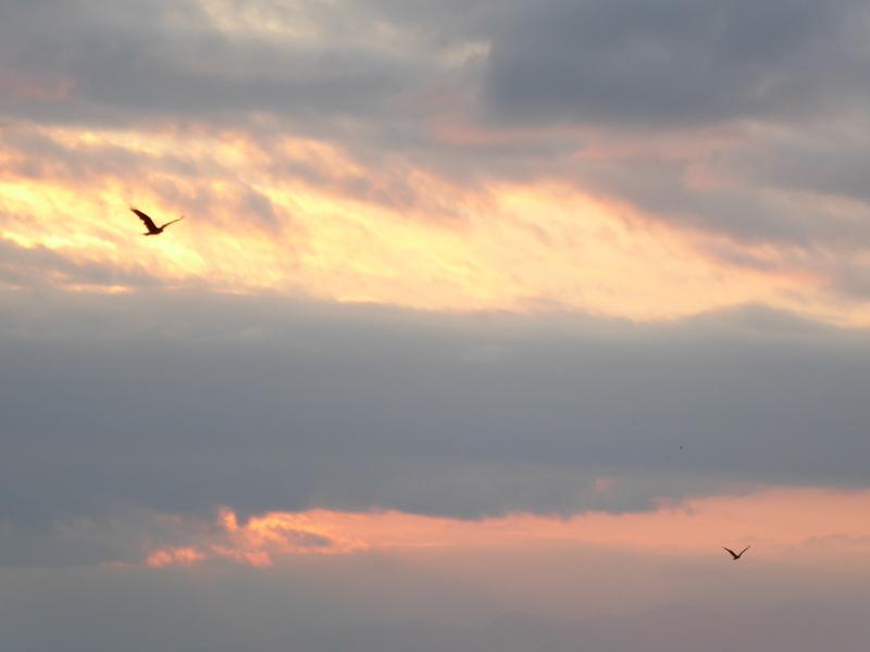 鳥遊ぶ琵琶の空