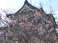梅かおる彦根城