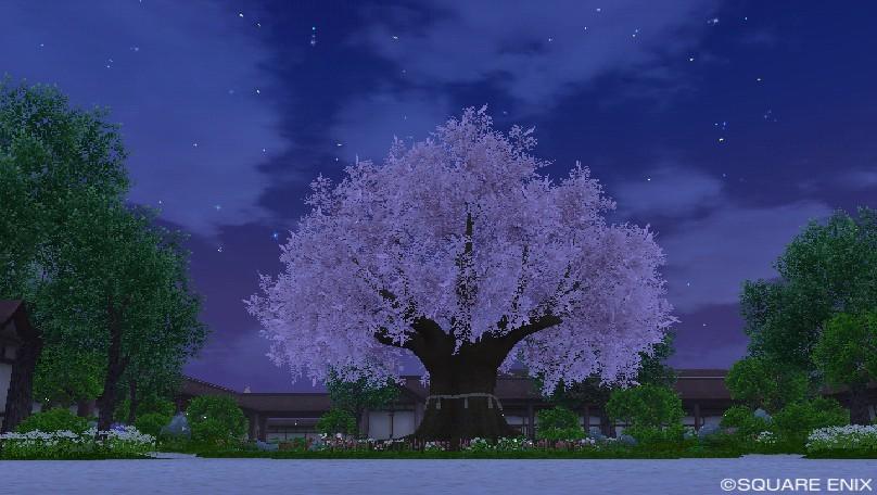 マナの撮影・桜