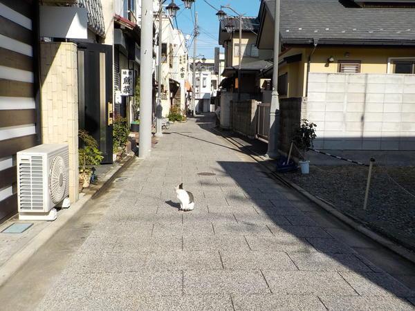 f:id:uchikoyoga:20201116083227j:plain