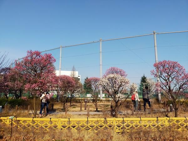 f:id:uchikoyoga:20210207231330j:plain