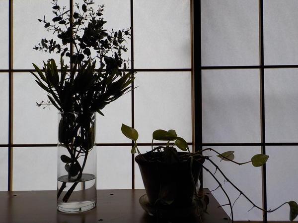 f:id:uchikoyoga:20210323092222j:plain