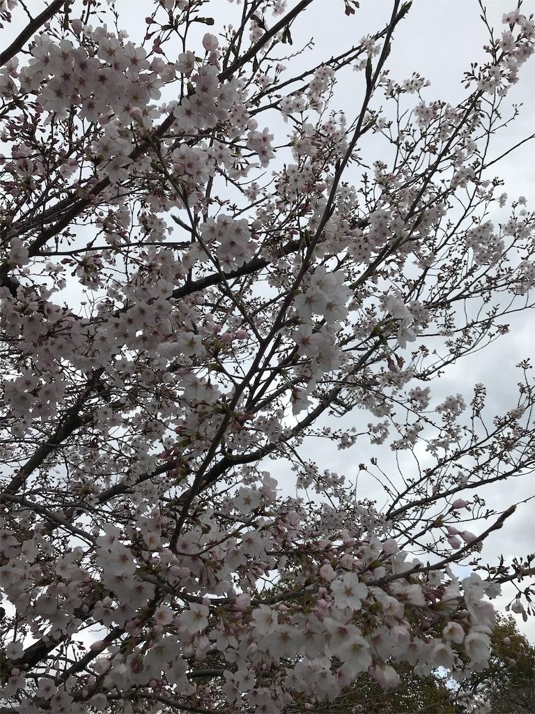 f:id:uchino_otetsudaisan:20200329150355j:image