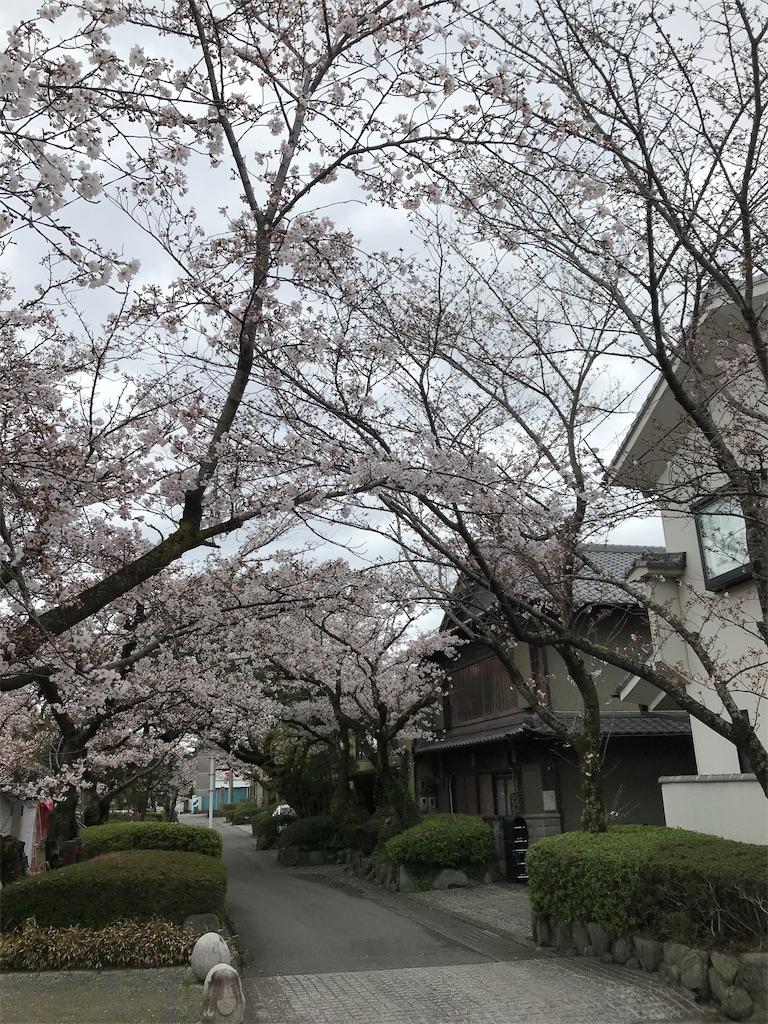f:id:uchino_otetsudaisan:20200329150427j:image