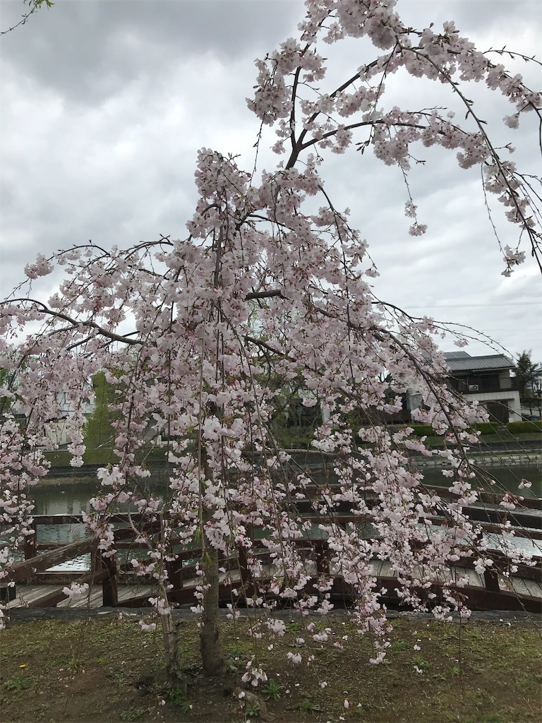f:id:uchino_otetsudaisan:20200329150434j:image