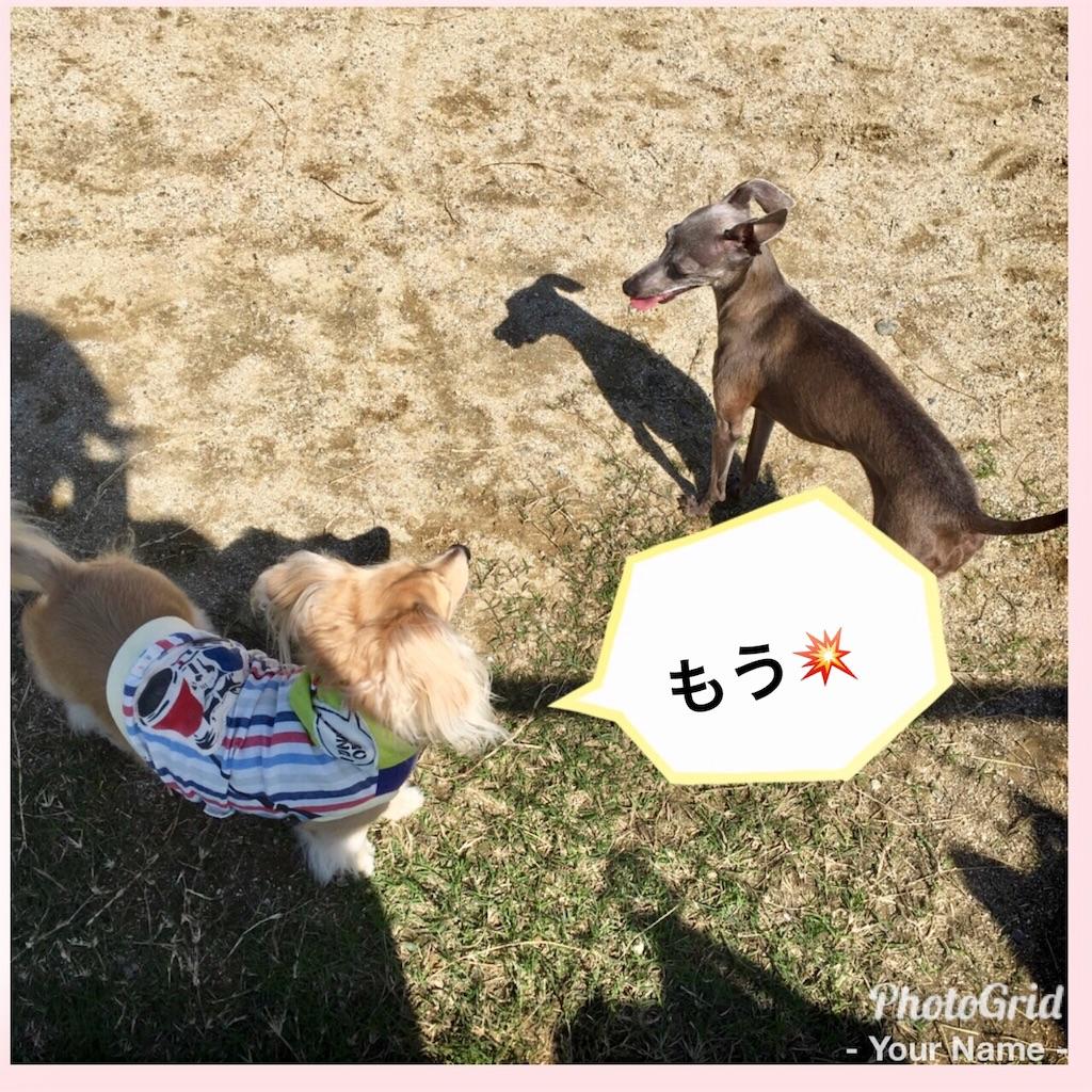 f:id:uchinoan:20171009081210j:image