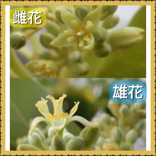 f:id:uchinokosodate:20180706102058p:image