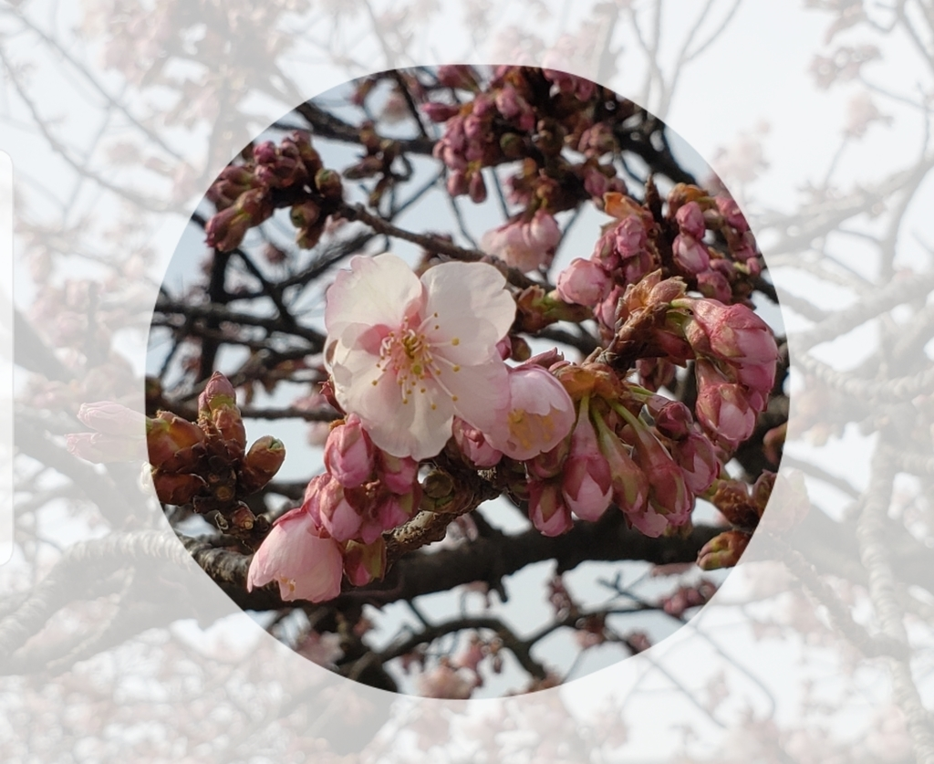 f:id:uchinomikan:20190210132415j:plain