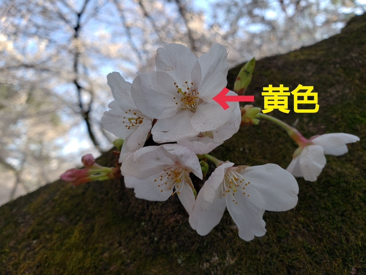 f:id:uchinomikan:20190406173823j:plain