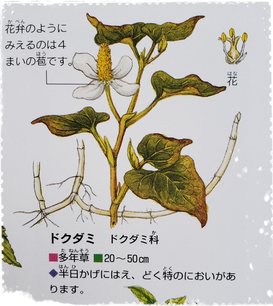 f:id:uchinomikan:20190418173048j:plain