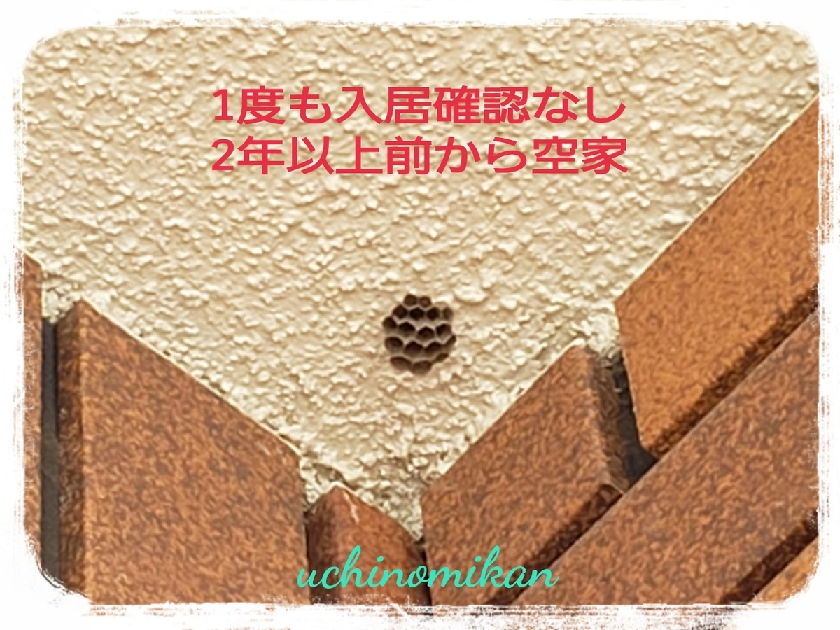 f:id:uchinomikan:20190628195838j:plain