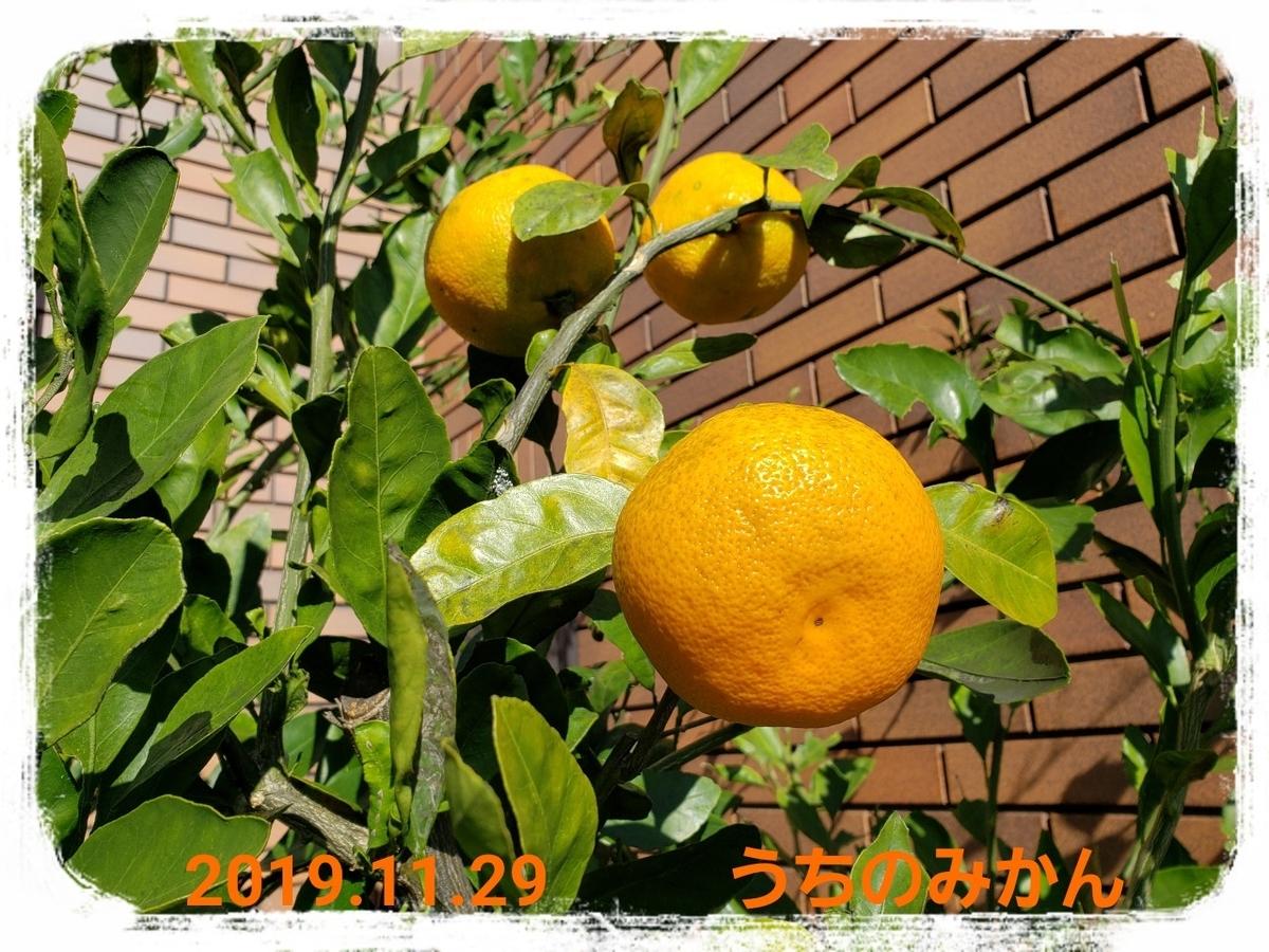 f:id:uchinomikan:20191129135148j:plain
