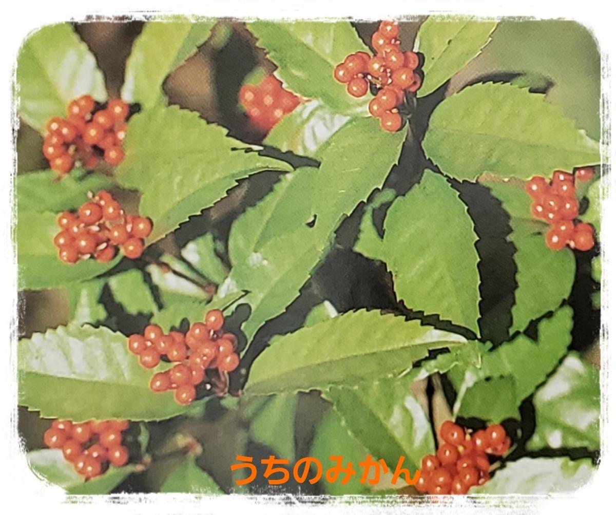 f:id:uchinomikan:20191226185152j:plain