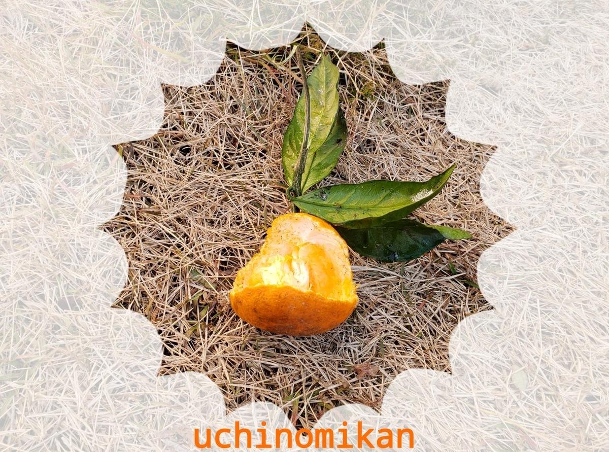 f:id:uchinomikan:20200116120228j:plain