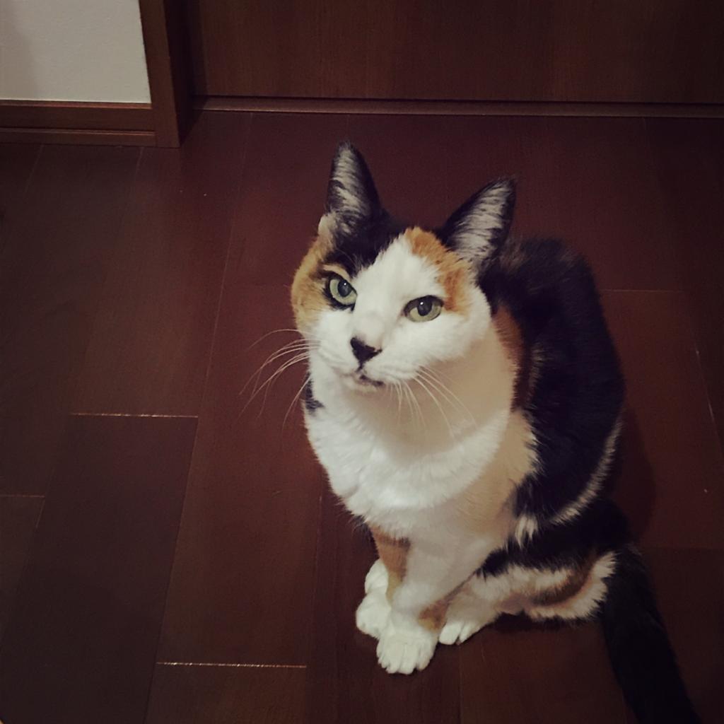 f:id:uchisuki:20170427213409j:plain