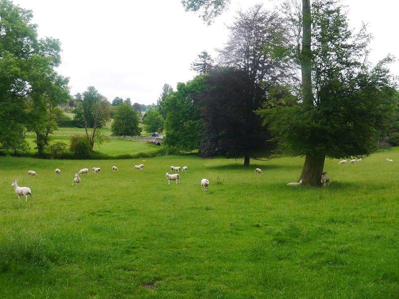 イギリスのフットパス。羊や馬、山羊にも会える