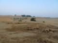 ラクダは砂と一体化