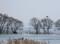 京都新聞フォトコンテスト 湖北の春眠