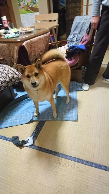 f:id:uenokoeda:20180817094648j:image