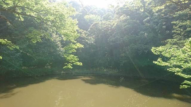 f:id:uenokoeda:20181231210830j:image