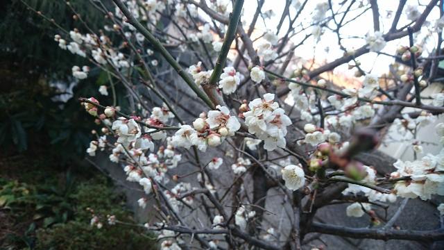 f:id:uenokoeda:20190406070329j:image