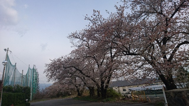 f:id:uenokoeda:20190420060619j:image