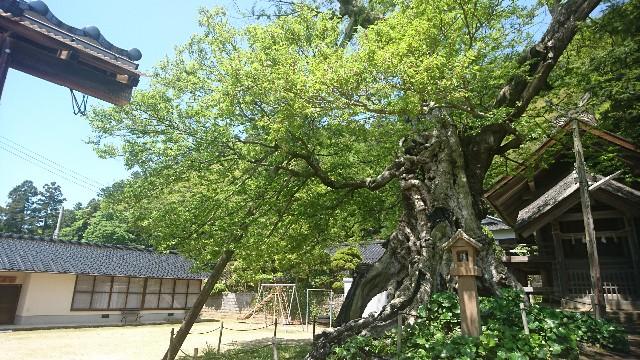 f:id:uenokoeda:20190507075700j:image