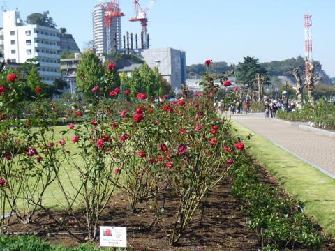 f:id:uenoshuichi:20121021112500j:image