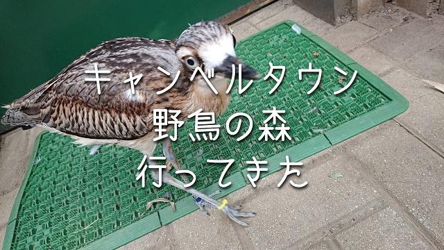 f:id:uenoyou111:20180806231826j:plain