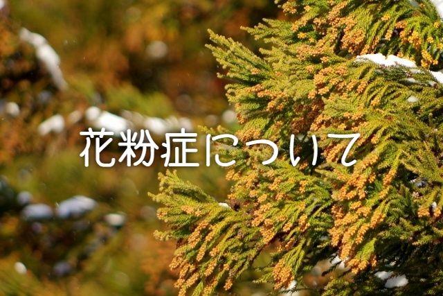 f:id:uenoyou111:20190103150901j:plain
