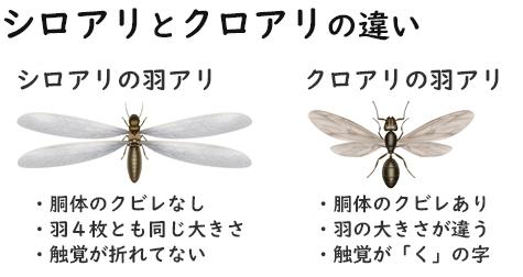 f:id:uenoyou111:20190104044103j:plain