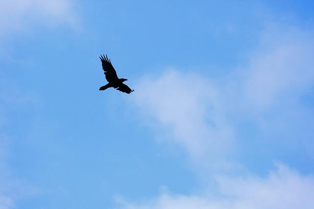 光の99%以上も吸収するベンタブラックに肩を並べる超黒い鳥が
