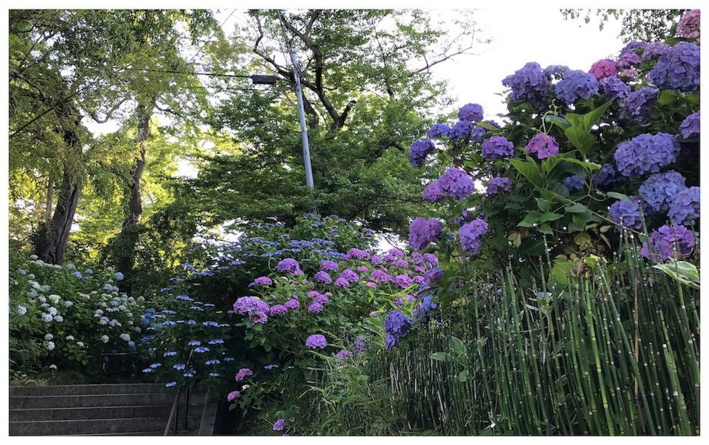 f:id:uesugi_rintaro:20180701101138j:plain