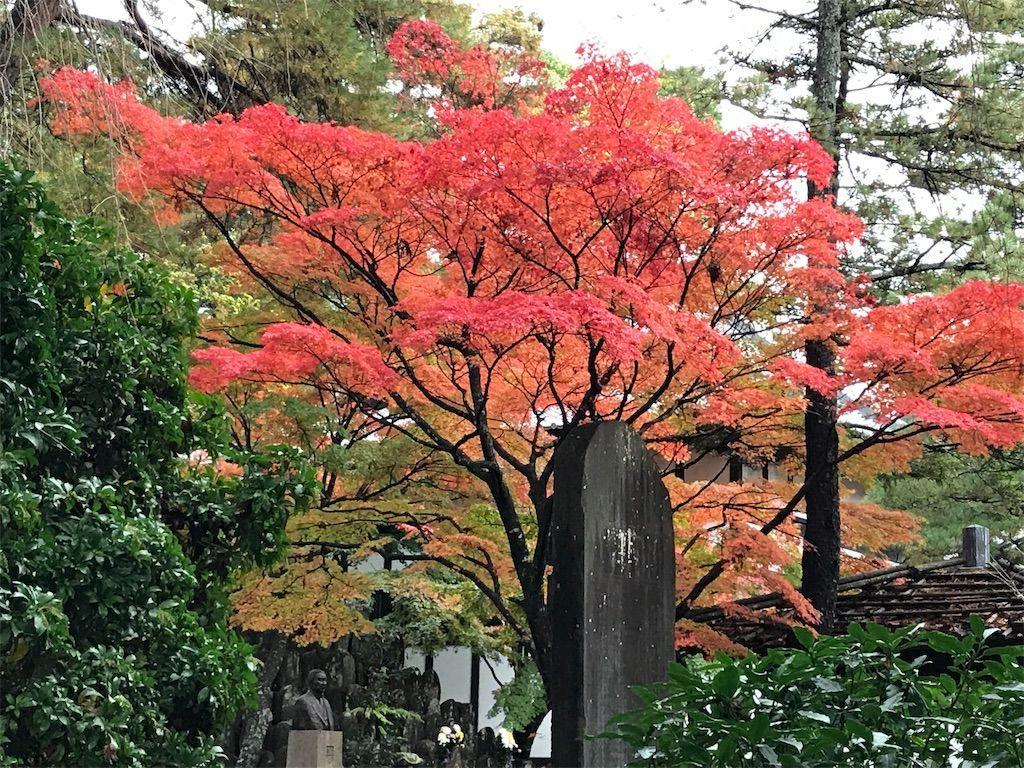 f:id:uesugi_rintaro:20181110124147j:plain
