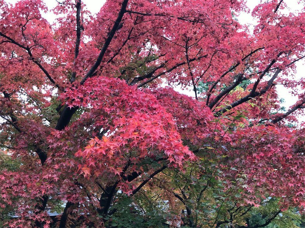 f:id:uesugi_rintaro:20181110124307j:plain