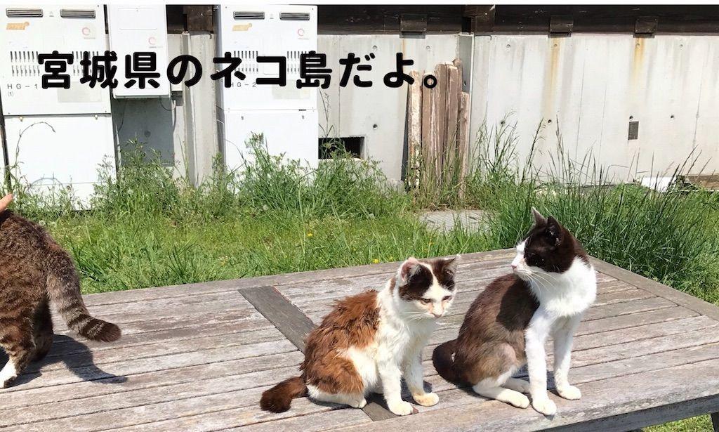 f:id:uesugi_rintaro:20181118194903j:plain