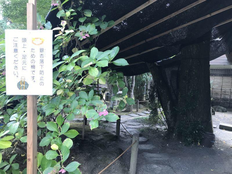 f:id:uesugi_rintaro:20191109104629j:plain