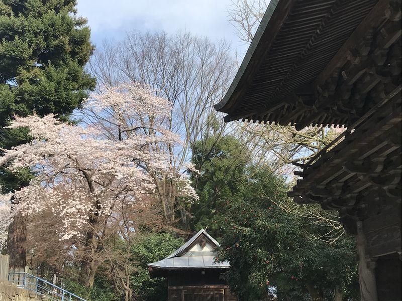 f:id:uesugi_rintaro:20200404145609j:plain